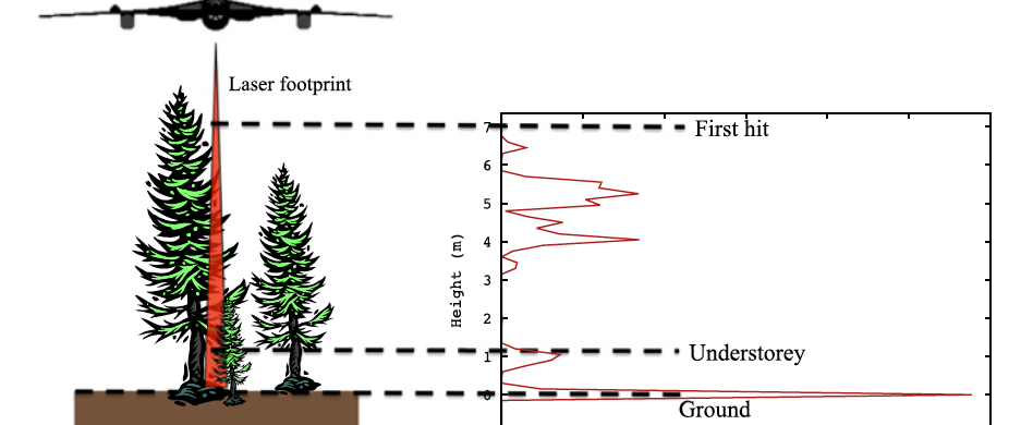 3D vegetation structure measured from a plane