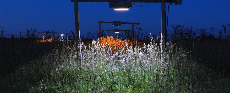 Lighting impacts on invertebrates